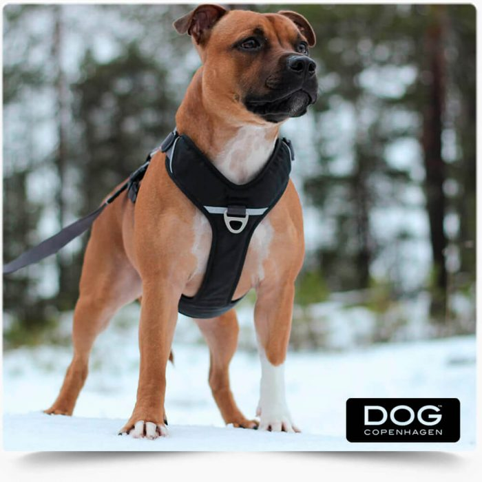 The Dog Copenhagen Comfort Walk Pro Harness is a strong and lightweight everyday harness made of durable stain and water-resistant materials with soft breathable padding. The easy to use aluminum fitting allows you to open/close the neck-strap - convenient for dogs that prefer not to have a harness pulled over the head. Try the matching Urban Freestyle leash for the complete look! Dog Copenhagen Comfort Walk Pro Harness include: Comfortable everyday harness that is easy to fit/put on Easy to use aluminum fitting to open/close the neck-strap Four points of adjustment to ensure optimal fit for each individual dog Soft breathable padding on chest, back and belly panels for comfortable daily use Two leash attachment options - one on the dog's back and one on the dog's chest Ergonomic design gentle on the dog's back and neck areas Efficient 3M™ reflective trim for enhanced visibility in low-light conditions Aluminium hardware - nothing on the harness will rust Separate ID tag attachment point Dog Copenhagen Australia: Dog Copenhagen is a world leading Danish company who is passionate about making high quality harnesses and urban gear for dogs. Dog Copenhagen Australia make comfortable, functional and durable DOG harness. These are suitable for your everyday urban and off-road adventures. They launched their first basic collection in February 2015. And are continuously working to design and develop new innovative products for the benefit of all quality-conscious dog owners. The mission is to design comfortable and durable products, with a functional and attractive design. These include the Comfort Walk Pro Harness and Comfort Walk Pro Harness. The Dog Copenhagen Comfort Walk Pro Harness is a strong and lightweight everyday harness. Made of durable stain and water resistant materials with soft breathable padding. The harness is easy to fit and put on and comfortable for the dog to wear during any level of exercise. The Comfort Walk Pro harness is a strong and lightweight everyday harness. Made of durable stain and water-resistant materials with soft breathable padding. The harness is easy to fit/put on and comfortable for the dog to wear during any level of exercise. The easy to use aluminum fitting allows you to open/close the neck-strap. Convenient for dogs that prefer not to have a harness pulled over the head. Dog Copenhagen Australia is inspired by the active life with our four-legged friends. It's natural for us to use the best possible materials and components. They need to be suitable for demanding use in training, trekking in the forest and in particular the daily adventures in city streets and parks. There are a lot of exciting ideas for future products, designed for the active lifestyle with our dogs that we love and is the driving force that motivates us.